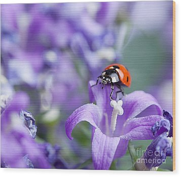 Ladybug And Bellflowers Wood Print by Nailia Schwarz