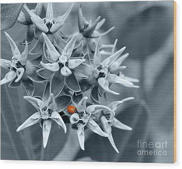 Ladybug Flower Wood Print by Rebecca Margraf