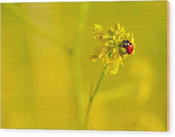 Ladybug On Yellow Flower Wood Print by Hegde Photos