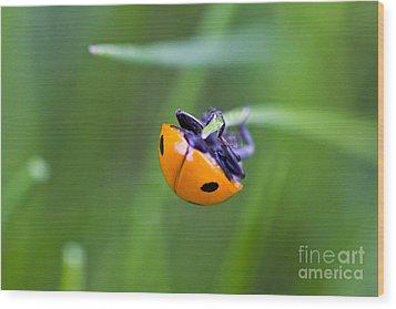 Ladybug Topsy Turvy Wood Print by Donna Munro