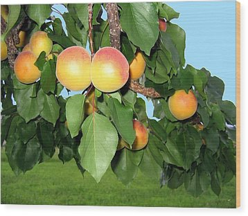 Lake Country Apricots Wood Print by Will Borden