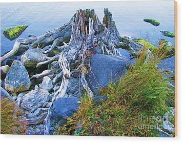 Wood Print featuring the photograph Lake Shore Weathered Stump by Michele Penner