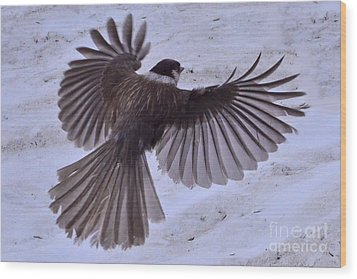 Wood Print featuring the photograph Landing by Jack Moskovita