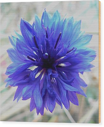 Lapis Lazuli Wood Print by Barbara St Jean