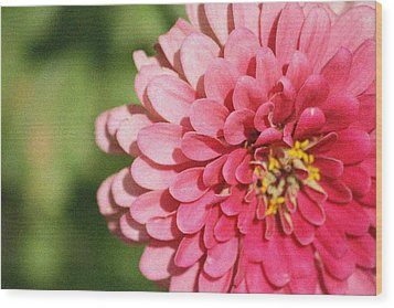 Wood Print featuring the photograph Large Pink Zinnia by Donna  Smith