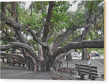 Largest Banyan Tree In The Usa Wood Print by Kirsten Giving