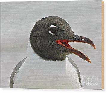 Wood Print featuring the photograph Laughing Gull Looking Left by Eve Spring
