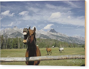 Laughing Horse Wood Print by Porterfld and Chickerng and Photo Researchers