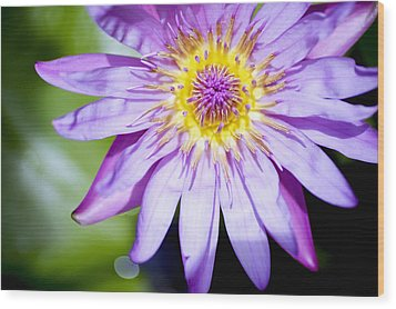 Lavendar Water Lily Wood Print by Kicka Witte