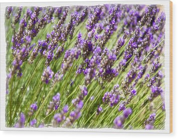 Wood Print featuring the photograph Lavender 2 by Ryan Weddle