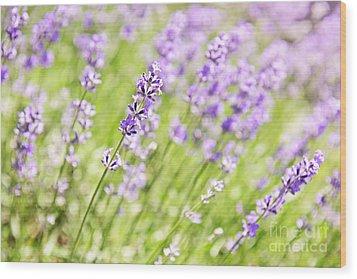 Lavender Blooming In A Garden Wood Print by Elena Elisseeva