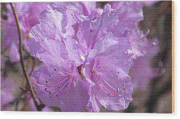Lavender Elegance Wood Print