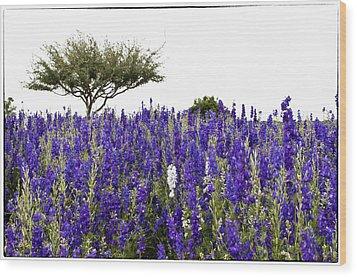 Lavender Field Wood Print by Lisa  Spencer
