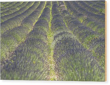 Lavender Field Wood Print by Yves ANDRE