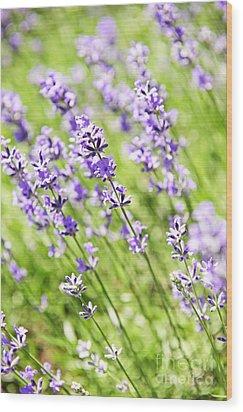 Lavender In Sunshine Wood Print by Elena Elisseeva