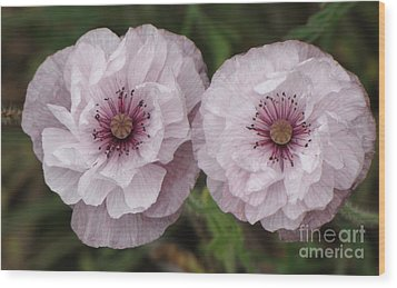 Wood Print featuring the photograph Lavender Poppies by Michele Penner