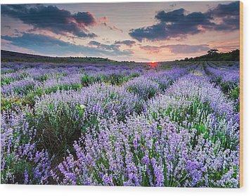 Lavender Sea Wood Print by Evgeni Dinev