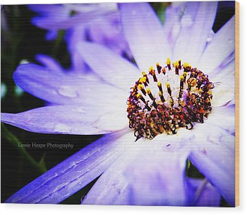 Lavender Senetti Wood Print by Lessie Heape
