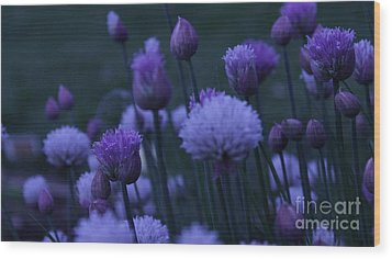 Lavender Twilight Wood Print by Iman Trek