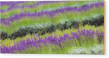 Wood Print featuring the photograph Lavender2 by Ryan Weddle