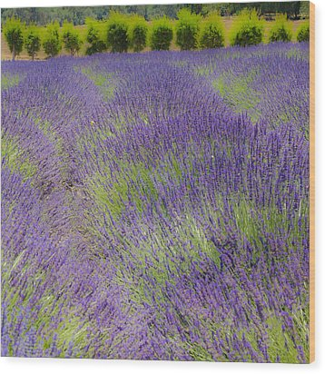 Lavender3 Wood Print by Ryan Weddle