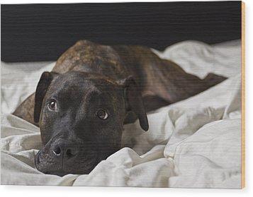 Lazy Days Wood Print by Drew Castelhano