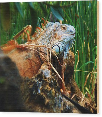 Lazy Lizard Lounging Wood Print