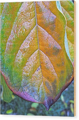 Wood Print featuring the photograph Leaf by Bill Owen
