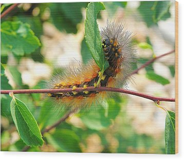 Leaf Eating Caterpillar Wood Print