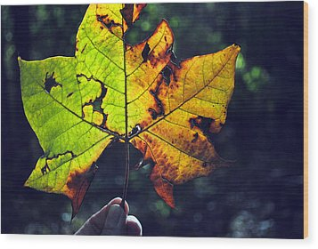 Leaf In Light Wood Print