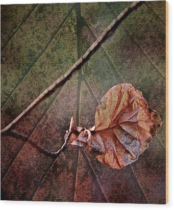 Leaf On Leaf Wood Print by Odd Jeppesen