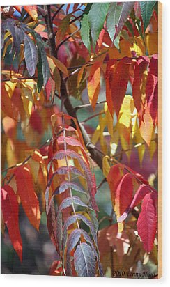 Wood Print featuring the photograph Leaf Peeping by Penny Hunt