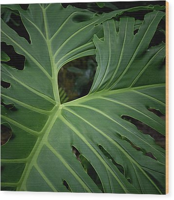 Leaf With Empty Space Wood Print by David Coblitz