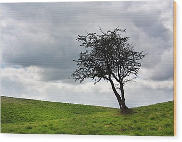 Leafless  Wood Print by Semmick Photo