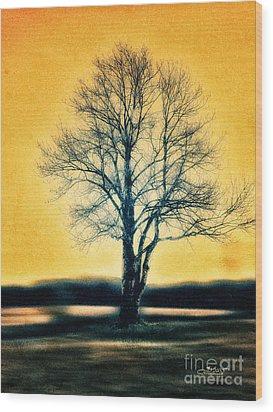 Leafless Tree Wood Print by Jutta Maria Pusl