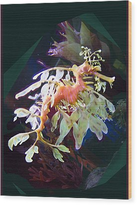 Leafy Sea Dragon Wood Print by Ginny Schmidt