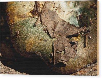 Leaves And Stuff Keep Falling On My Head Wood Print by Wilma  Birdwell