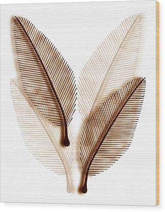 Leaves Wood Print by Frank Tschakert