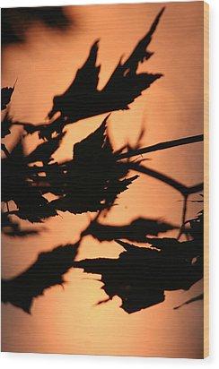 Leaves In Sunset Wood Print by Carolyn Reinhart