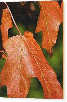 Leaves Of Orange Wood Print by Beth Akerman