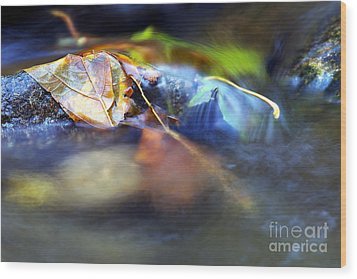 Leaves On Rock In Stream Wood Print by Sharon Talson
