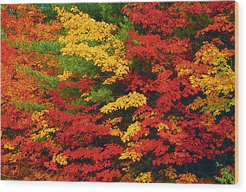 Leaves On Trees Changing Colour Wood Print by Mike Grandmailson
