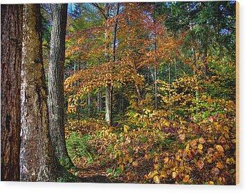Leaving Cary Lake Wood Print by David Patterson