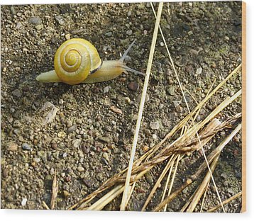 Lemon Snail Wood Print