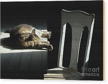 Let Sleeping Cats Lie Wood Print by Bob Christopher