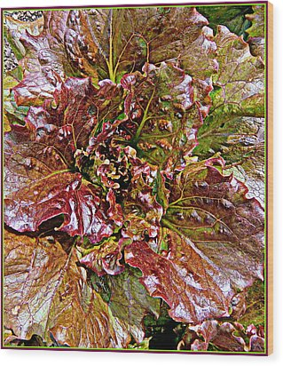 Lettuce Wood Print by Mindy Newman