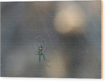 Leucauge Venusta Wood Print by Sean Green