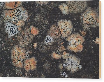 Lichen Abstract Wood Print by Susan Capuano
