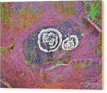 Lichen Eyes Wood Print by Michele Penner