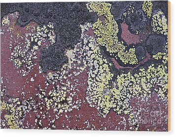 Lichen Pattern Series - 25 Wood Print by Heiko Koehrer-Wagner